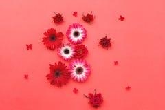 Blommande naturliga blommor på röd pappers- bakgrund Arkivbild