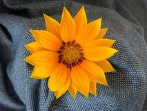 Blommande ny kulör blomma Royaltyfri Foto