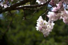 Blommande nypremiär till liv Arkivfoto