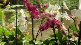 Blommande orkidér i parkera på en bakgrund av en vattenfall stock video