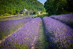 Blommande purpurfärgade lavendelfält på den Senanque kloster, Provence, sydliga Frankrike royaltyfri fotografi