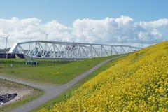 Blommande rapsfrö framme av den Maeslant barriären Fotografering för Bildbyråer