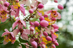 Blommande regnbågeduschar royaltyfri foto