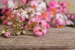 Blommande regnbågeduschar fotografering för bildbyråer