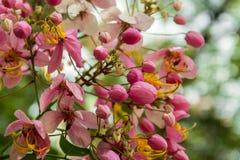 Blommande regnbågeduschar arkivbild
