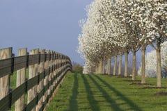 Blommande skogskornellträd och staket royaltyfri foto