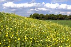 Blommande smörblommor och stackmolnmoln Royaltyfri Foto