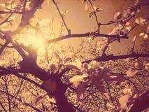 Blommande sol Royaltyfri Fotografi