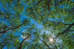 Blommande träd mot himlen Royaltyfria Bilder