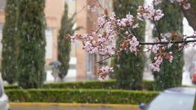 Blommande träd på fallande snö och passerby med paraplybakgrund stock video