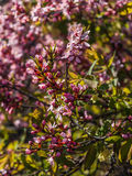 Blommande träd på vårabstrakt begreppbakgrund Arkivbild