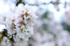 Blommande träd på vårabstrakt begreppbakgrund Arkivbilder