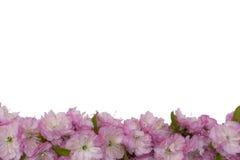 Blommande träd på vårabstrakt begreppbakgrund Fotografering för Bildbyråer