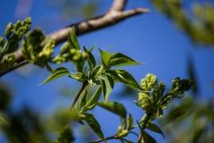 Blommande träd som på våren vaknar naturen Royaltyfria Bilder