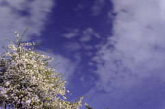 Blommande träd under natthimmel Royaltyfri Bild