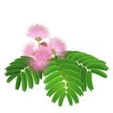 Blommande trädfilial som isoleras på vit Arkivbilder