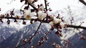Blommande trädgård i den Kalpa byn stock video