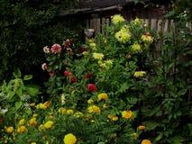 Blommande trädgård med olika blommor Royaltyfri Foto