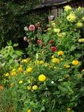 Blommande trädgård med olika blommor Royaltyfria Foton