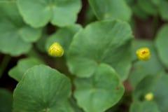Blommande tr?dg?rd f?r v?r gult och purpurf?rgade ?r de f?rsta blommorna snowdrops royaltyfri bild
