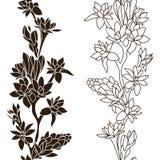 Blommande Tuberose Arkivbilder