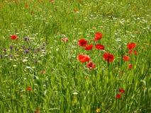 Blommande vildblommaäng Arkivfoton