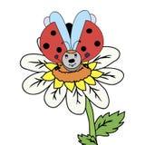 blommanyckelpiga Arkivfoto