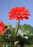 blommaorange arkivfoto