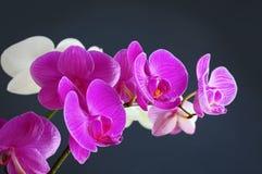 blommaorchid Arkivfoto