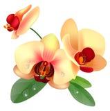 blommaorchid vektor illustrationer