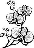 blommaorchiden skissar stock illustrationer