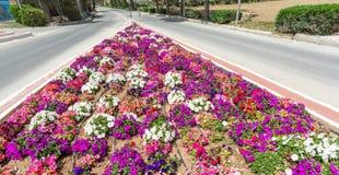 Blommaordning och karuseller i Malta royaltyfri bild