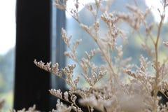 Blommaordningar i vaser Royaltyfri Foto