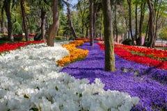 Blommaordningar parkerar på våren Emirgan på tulpanfestivalen i Istanbul royaltyfri fotografi
