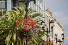 Blommaordningar som hänger på belysningstolpar, San Jose, Kalifornien royaltyfria bilder