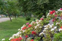Blommaordningen i en härlig stad parkerar arkivbild