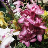 blommaorhid royaltyfria foton