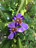 Blommaorkidé royaltyfria foton