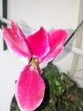 Blommaorquidia arkivbild