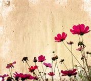 blommapapper Arkivbilder