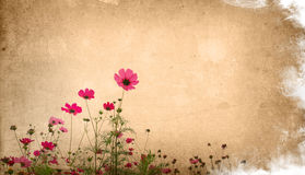 blommapapper Arkivfoto