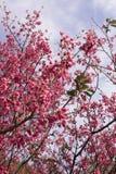 blommapersika Arkivbilder