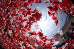 blommapetalpöl royaltyfria foton