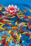 blommapetals Arkivbild