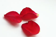 blommapetals Arkivfoto