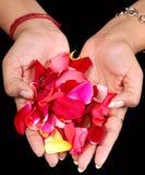 blommapetals Royaltyfri Foto