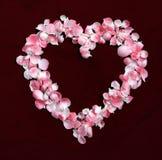 BlommaPetals i en hjärta formar Fotografering för Bildbyråer
