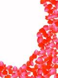 blommapetals steg Royaltyfri Bild