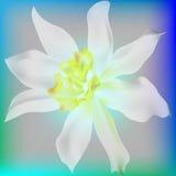 Blommapingstlilja royaltyfri illustrationer