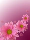 blommapink Royaltyfri Fotografi